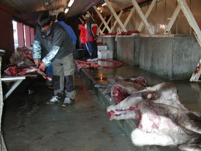 A man cuts up reindeer at a country foods market in Nuuk. (PHOTO BY JANE GEORGE)