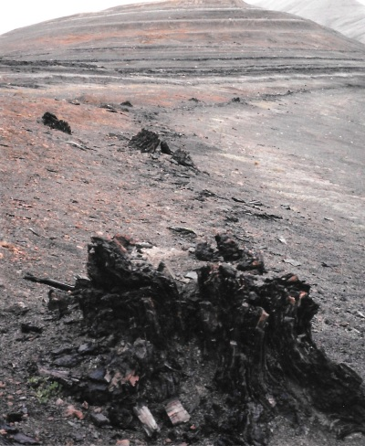An ancient stump on the Geodetic Hills of Axel Heiberg. (PHOTO BY JANE GEORGE)