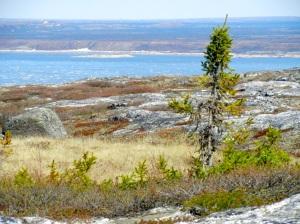 Koksoak river near Kuujjuaq in early June. (PHOTO BY JANE GEORGE)
