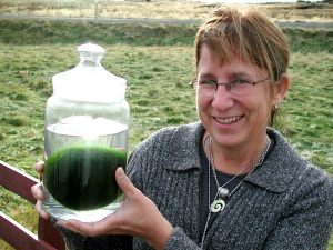 I hold a jar with an algae ball from Myvatn, Iceland. (PHOTO BY JANE GEORGE)